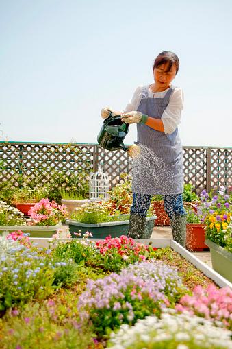 Toit-terrasse végétalisé