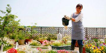 """Toit-terrasse végétalisé : la """"couverture"""" fraîcheur des bâtiments"""
