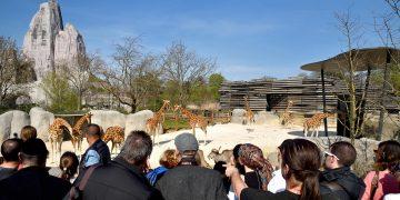 Au Zoo de Vincennes, le béton se fait caméléon