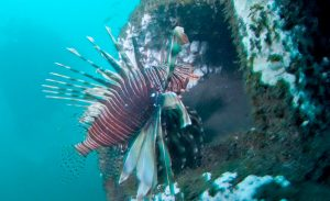 Des pouponnières en béton pour les espèces marines tropicales à la Réunion ©Architeuthis