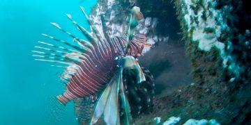 Des pouponnières en béton pour les espèces marines tropicales