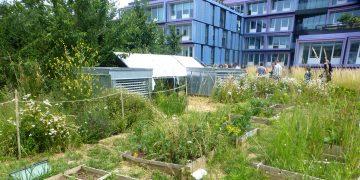 Végétalisation rime avec béton, pour des villes à vivre